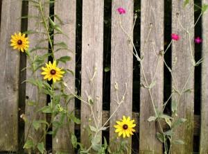 fence-438523_960_720